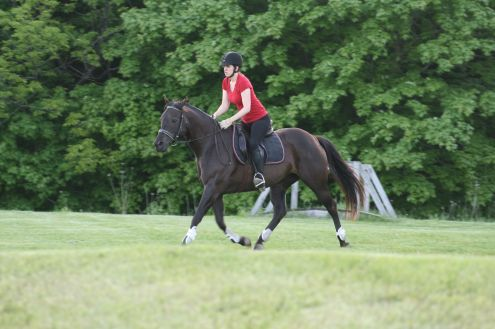 Trot sets; coming off a steep hill looking fancy