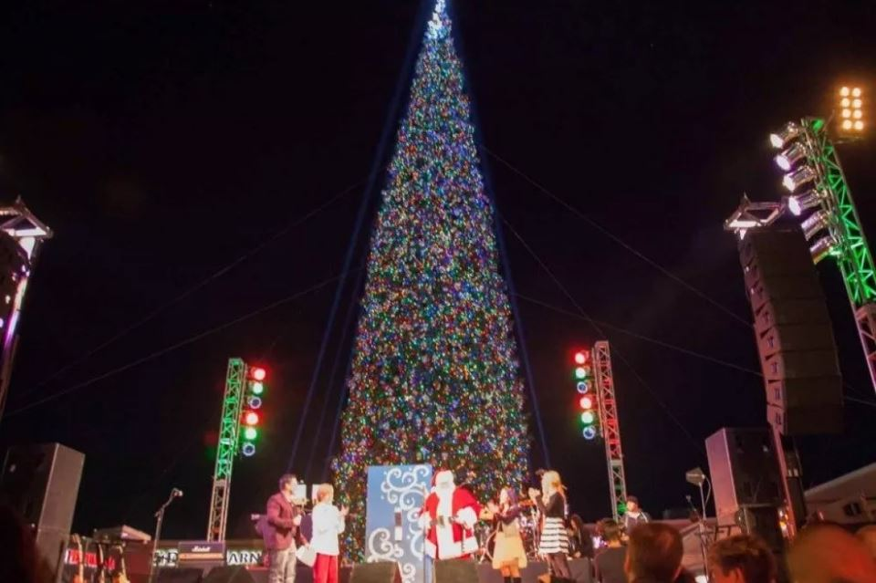 Arizona Christmas Tree