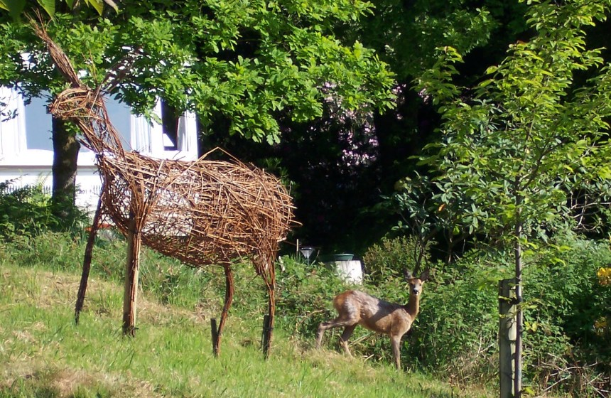 Oh deer! One herd member does a double take as it glimpses a willow deer sculpture in the grounds at Skelwith Fold