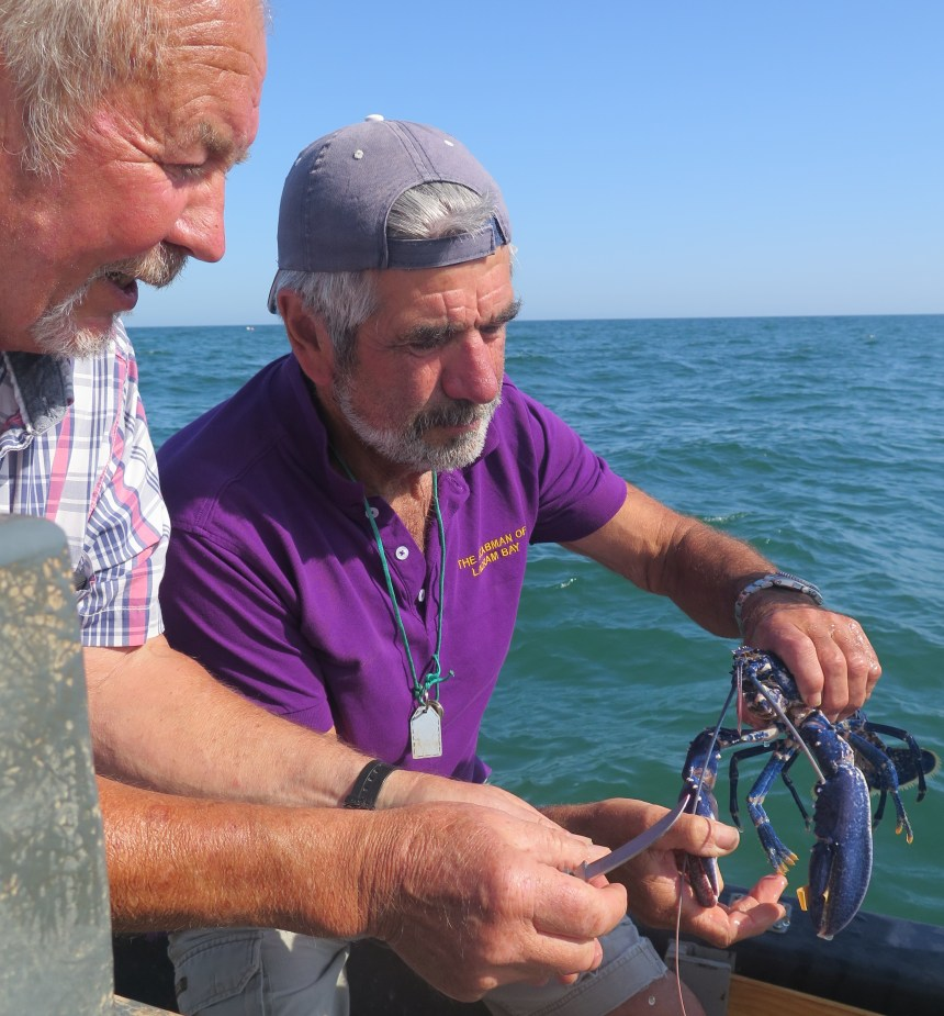 Preparing to release Larry back into the deep are Ladram Bay's Robin Carter (left) and holiday home owner Keith Setter