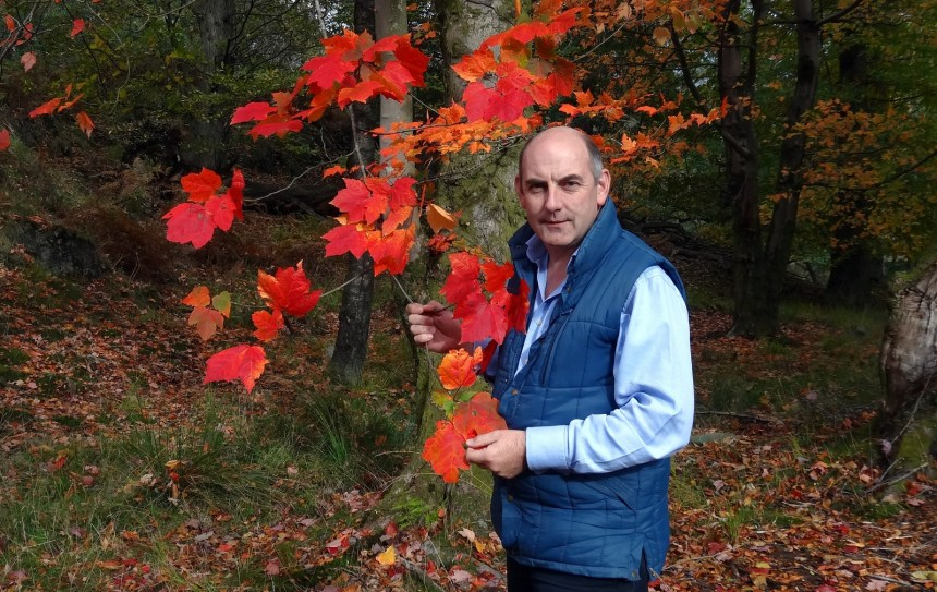 Henry Wild (above) admits that nature has the upper hand this year when it comes to colourful displays