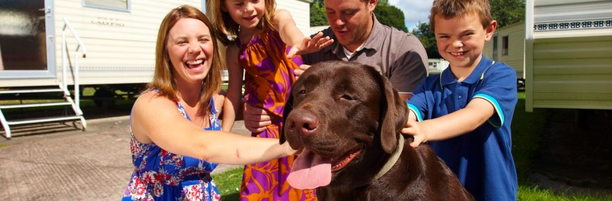 Rex is reprieved from the kennels by growing numbers of UK staycation guests who take their pets on holiday