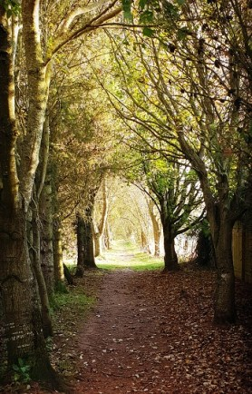Visitors can enjoy peaceful woodland walks in the grounds
