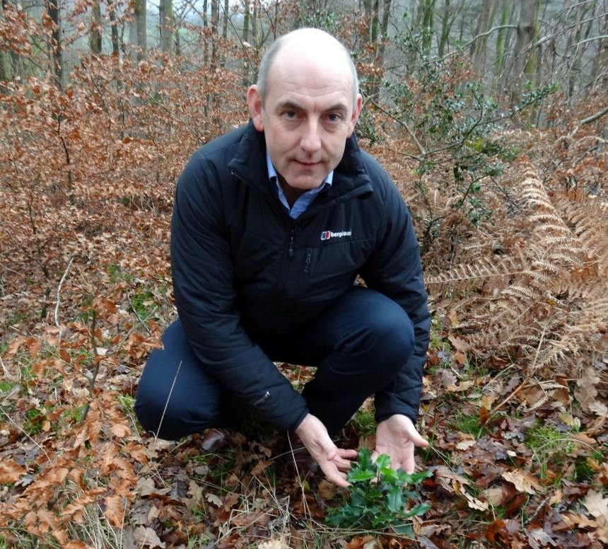 The tiny holly tree cradled by Henry Wild in the park's beech wood will be one of the plants set to benefit