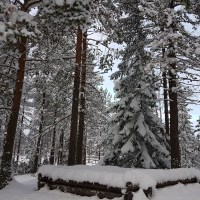 Sweden in Pictures 9 - Winter Forrest Photography