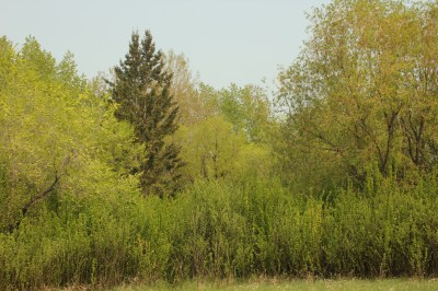 Richard St. Barbe Baker Afforestation Area. Saskatoon, SK, CA