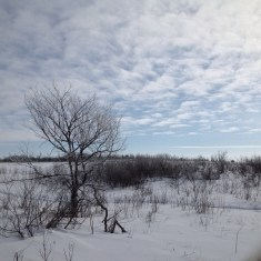 Richard St. Barbe Baker Afforestation Area. Saskatoon, SK, CA Winter.