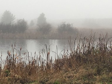 Richard St. Barbe Baker Afforestation Area and West Swale Wetlands in the fog
