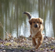 dog-by-pond