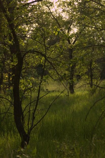 Forest Richard St. Barbe Baker Afforestation Area, Saskatoon, Saskatchewan, Canada