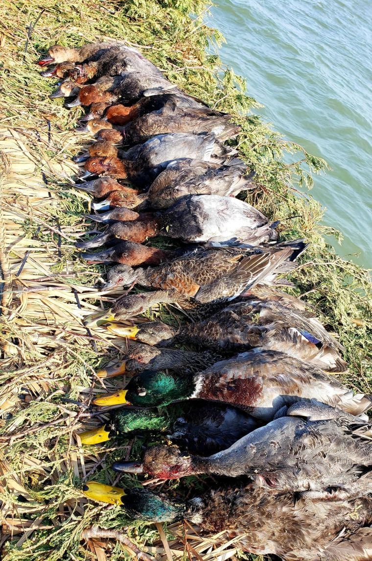 122725829 1037118843455756 6528013995260972290 n 3 St. Clair Duck Hunts