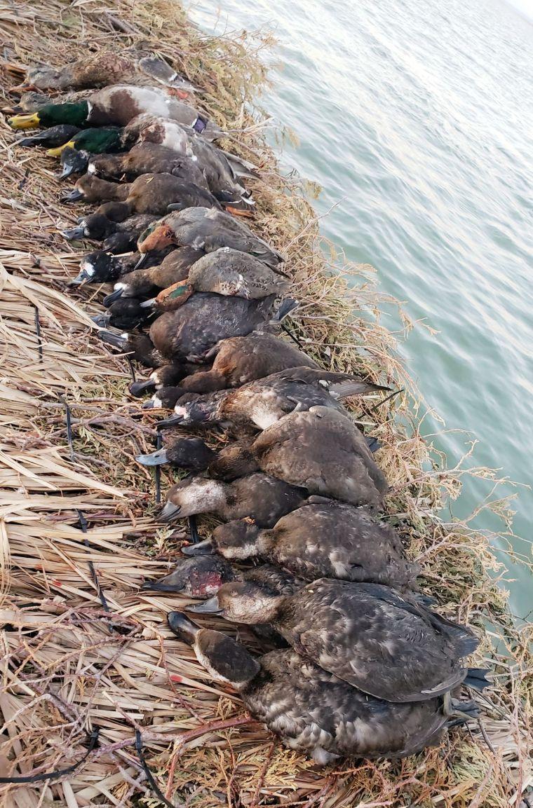 124025119 1149638302100572 1045023308561760926 n 2 St. Clair Duck Hunts
