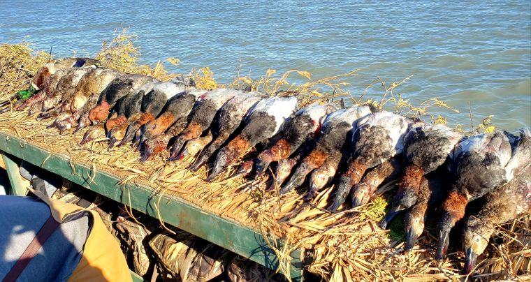 126107503 4668947536509598 2694695181413544122 n 2 St. Clair Duck Hunts