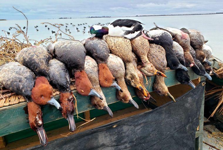 129760426 1660349430801431 5452664273773495920 n 2 St. Clair Duck Hunts
