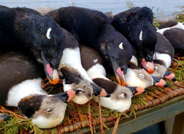 131888971 222934615891907 5905703298422855047 n 2 St. Clair Duck Hunts