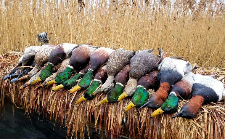 135507084 197972398458129 9099921861845222924 n 1 St. Clair Duck Hunts