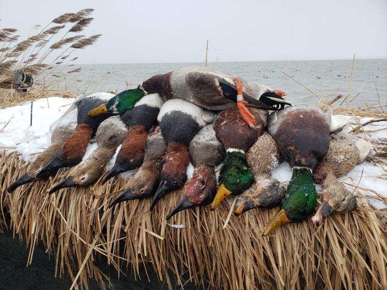 139393907 435587670959633 411820435258185490 n 2 St. Clair Duck Hunts