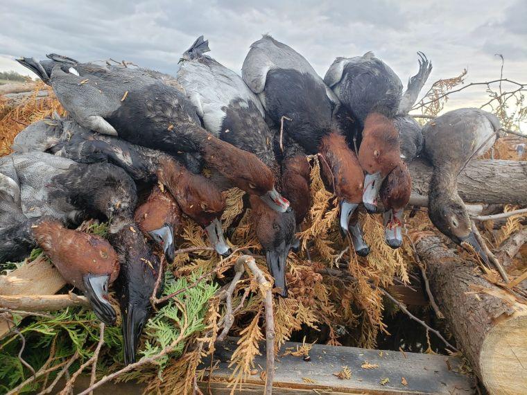 139531450 429568021735959 780840117058336499 n 2 St. Clair Duck Hunts