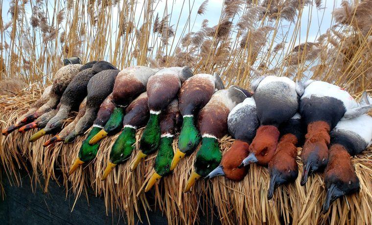 139633060 779444906303242 823698718799189951 n 3 St. Clair Duck Hunts