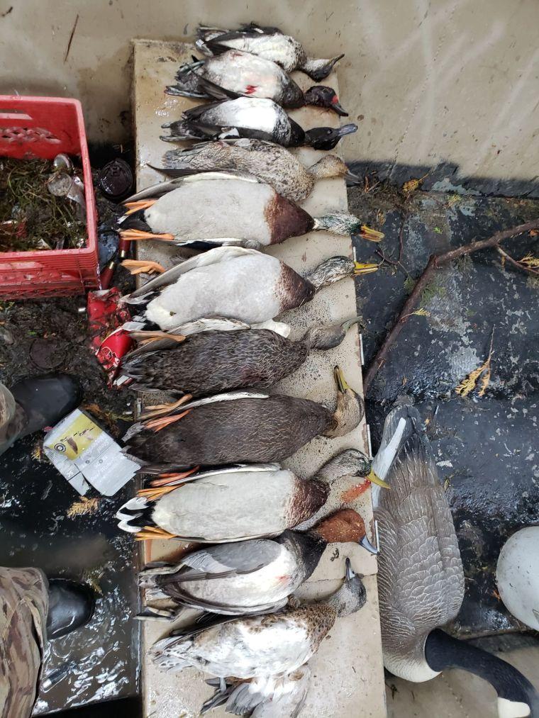 74205644 438394923756499 7738176576440762368 n 3 St. Clair Duck Hunts