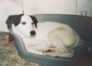 Sally, the dog