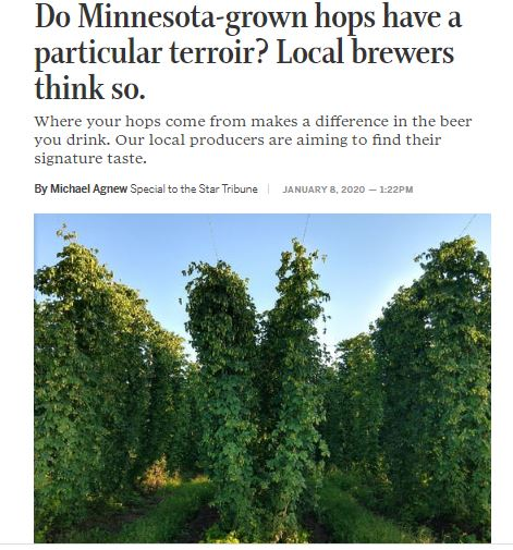 Star tribune article, terroir, Minnesota hops