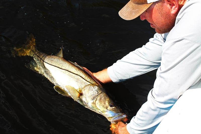 fisherman releasing a snook