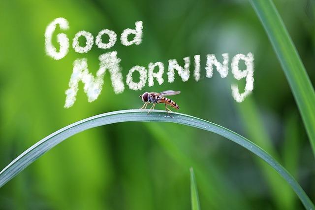 morning-795378_640