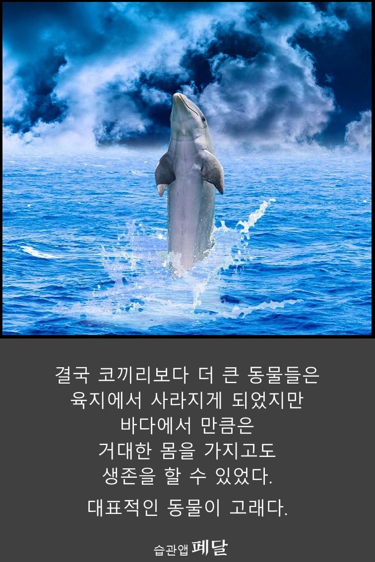 whale_6