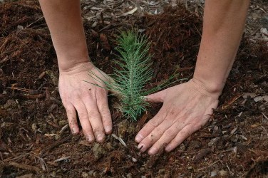 Reforestation - USFS Region 5