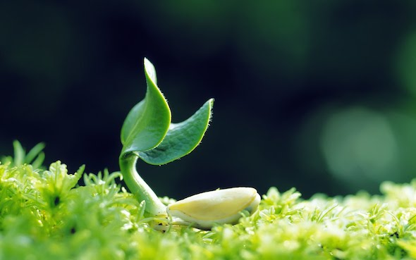 a seedling that represents the planting of a marketing vision