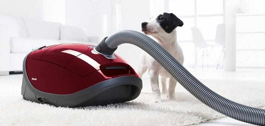 Best Home Carpet Cleaners for Pets 2019: Ideal for Dealing With Smells, Urine, Stains & More