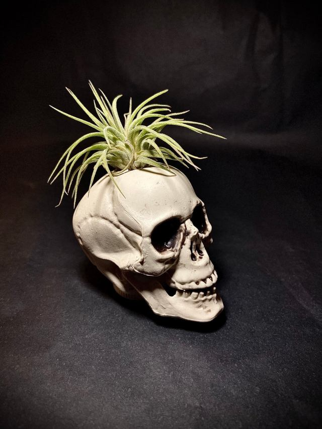 Skull Air Plant 1 13 Halloween Steampunk Decorations.