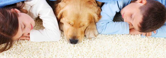 pet odor removal carpet cleaners