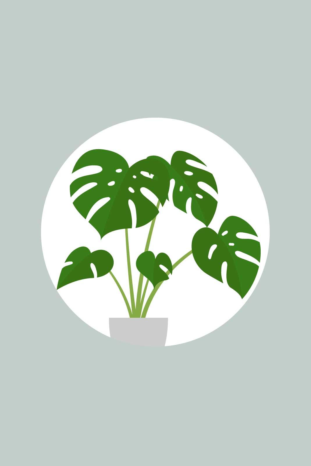 Verbeterplant-productafbeelding-v01