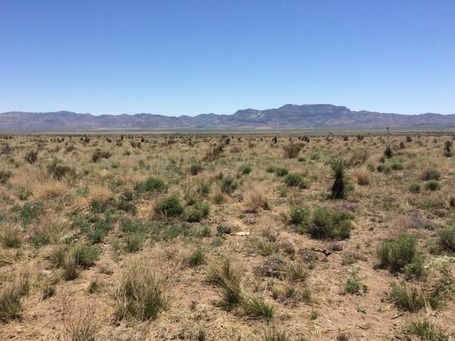 Landscape near San Simon, AZ
