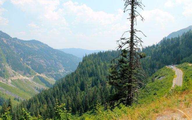 Stevens Canyon Road, Mt Rainier
