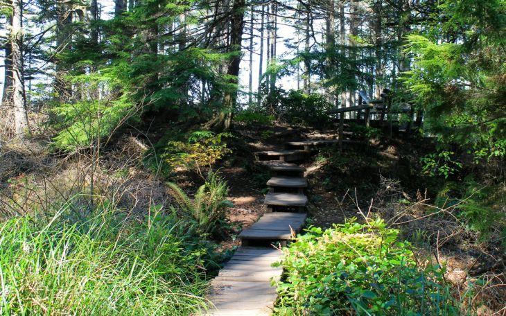Steps along trail