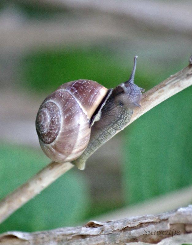 a snails moment1.jpg