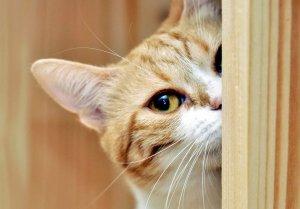 「cat happiness」の画像検索結果