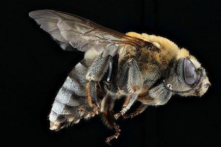 bee-change-density.jpg