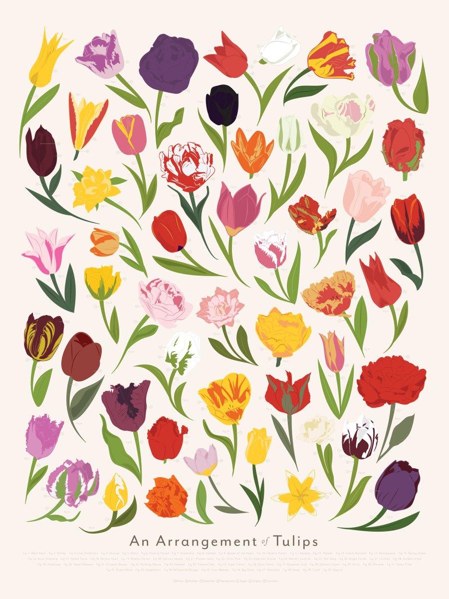 P-Tulips_Zoom.jpg