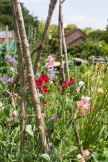 Allotment 3rd july 2014 lores-9332