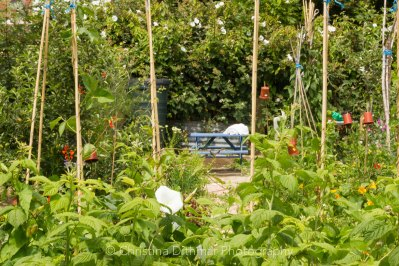 Allotment 3rd july 2014 lores-9355