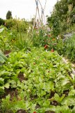 Allotment 3rd july 2014 lores-9368