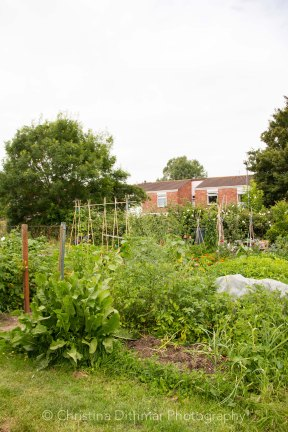 Allotment 3rd july 2014 lores-9376