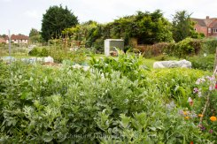 Allotment 3rd july 2014 lores-9389