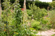 Allotment 3rd july 2014 lores-9393