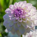 Blumen-24