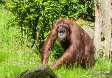 Der grüne Zoo in Wuppertal